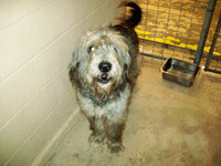 Image: Shaggy — Shaggy is a lovable dog in need of a home.